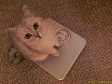 Сколько весит кошка