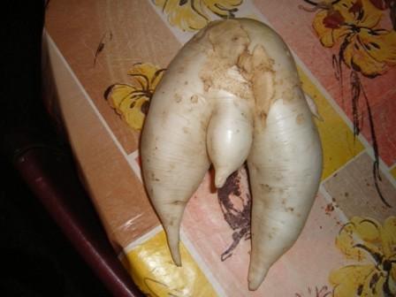 странный овощ