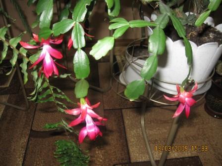 Цветем дома 1