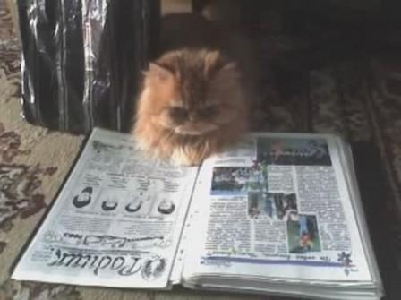 Баська читатель