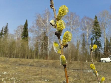 Весна! лепота