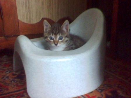 "кот по кличке""Кот"""