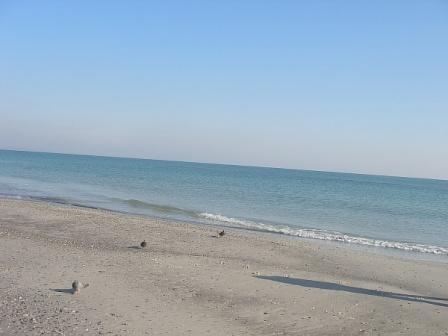Голуби и море