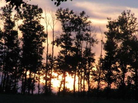 Закат сквозь лесополосу в степи
