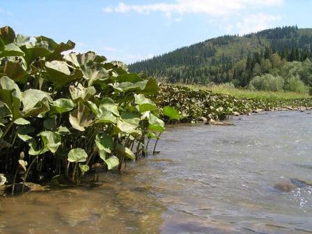 Речка близ села Семёновка