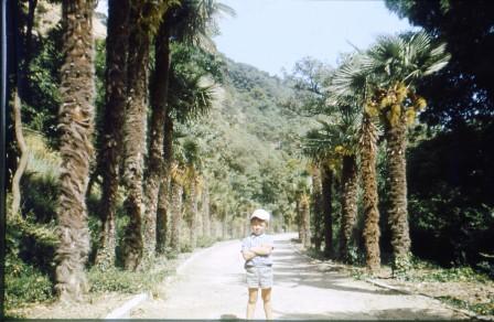 Коматозер позирует среди пальм