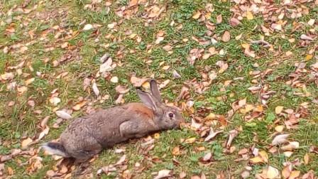 Песня про зайцев