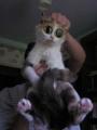 Виталина кошка
